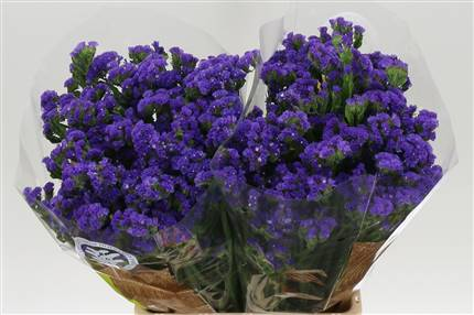 Grossiste Limonium S Cryst Dark Blue  : Limonium S Cryst Dark Blue  avec tarifs grossiste